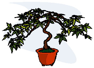 bonsai-immagine-animata-0017