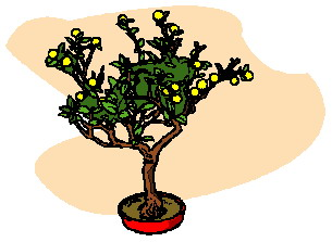 bonsai-immagine-animata-0020