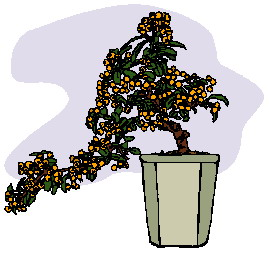 bonsai-immagine-animata-0021
