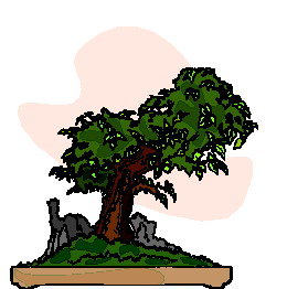 bonsai-immagine-animata-0022