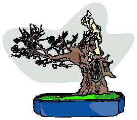bonsai-immagine-animata-0023