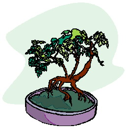 bonsai-immagine-animata-0024