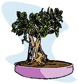 bonsai-immagine-animata-0025