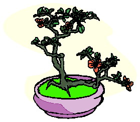 bonsai-immagine-animata-0026
