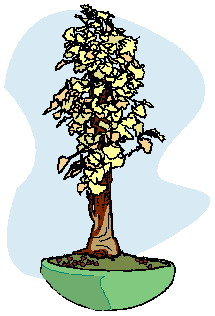 bonsai-immagine-animata-0028