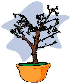 bonsai-immagine-animata-0030