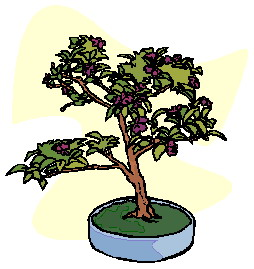 bonsai-immagine-animata-0032