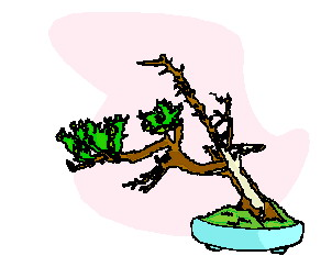 bonsai-immagine-animata-0034