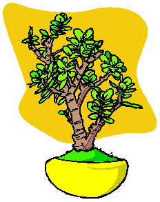 bonsai-immagine-animata-0035
