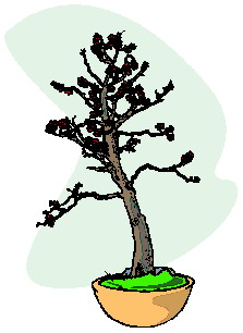 bonsai-immagine-animata-0042