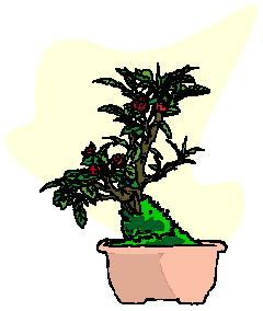 bonsai-immagine-animata-0043