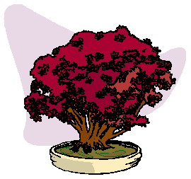 bonsai-immagine-animata-0044