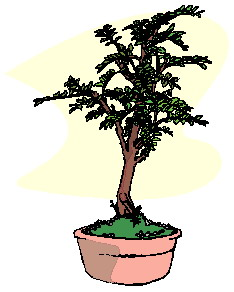 bonsai-immagine-animata-0045